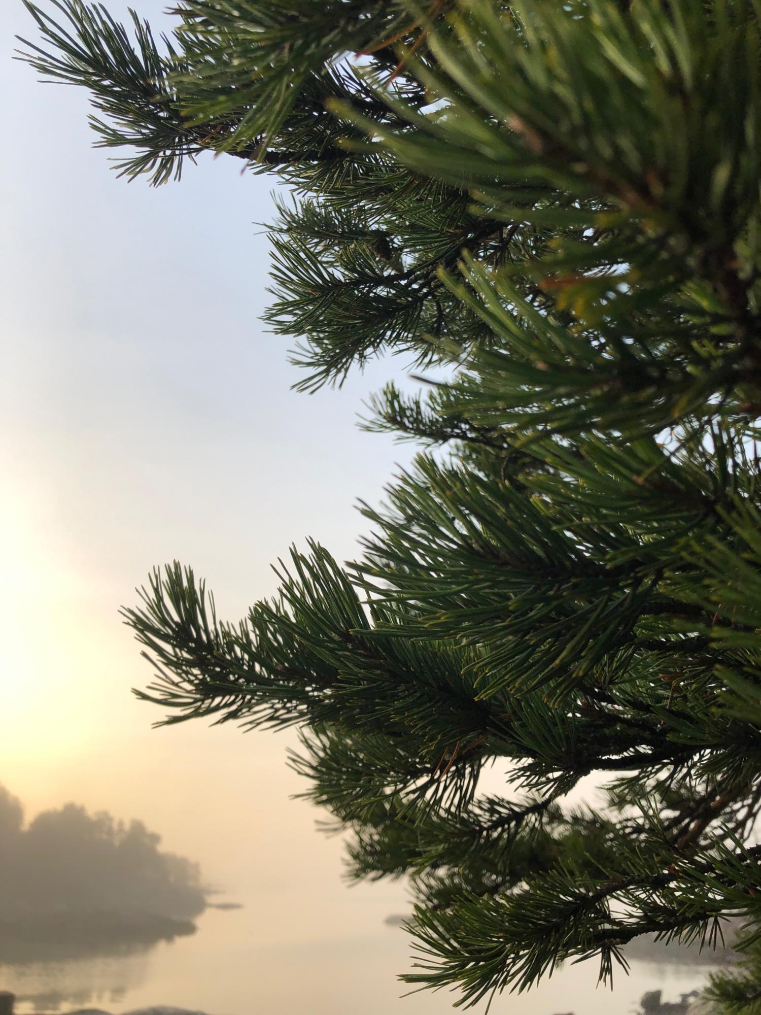 Mielimaisema | Anna lapselle rakkaus luontoon
