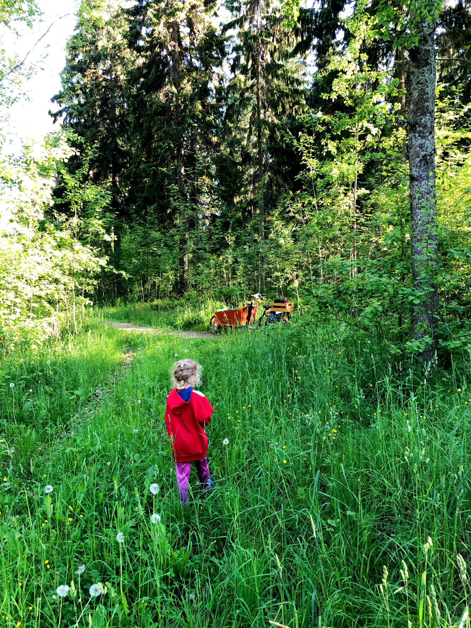 Mielimaisema | Läsnäoloa metsän hellässä huomassa